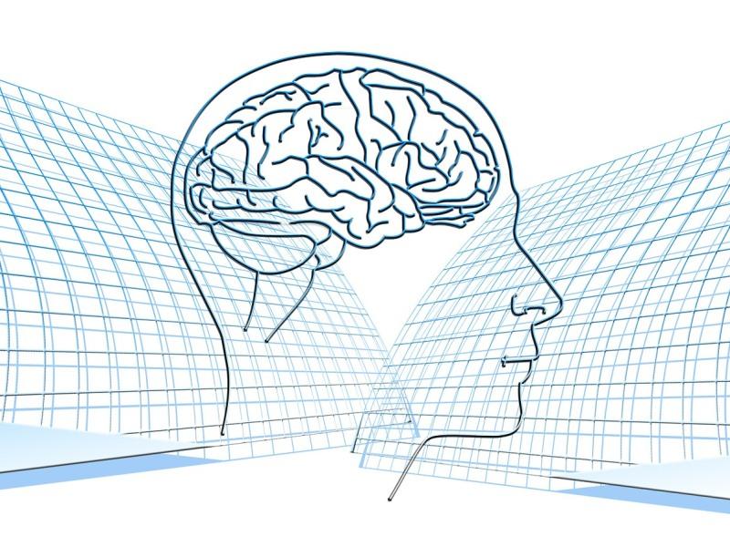 Нейробиология. Нейробиология. Мозг.