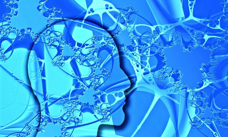 Работа мозга, нейробиология, как устроен мозг